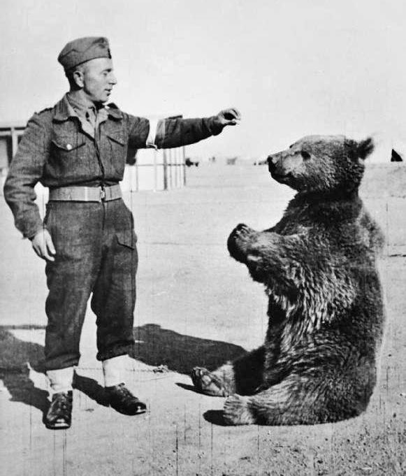 wojtek war bear
