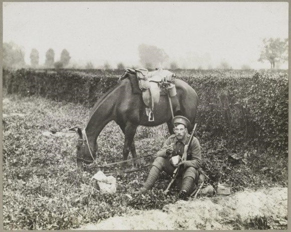 warrior war horse